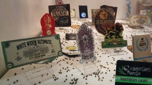 Семена конопли на выставке
