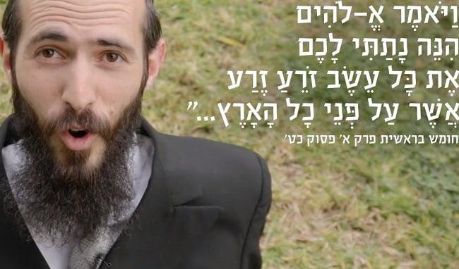 האם מותר קנאביס ביהדות