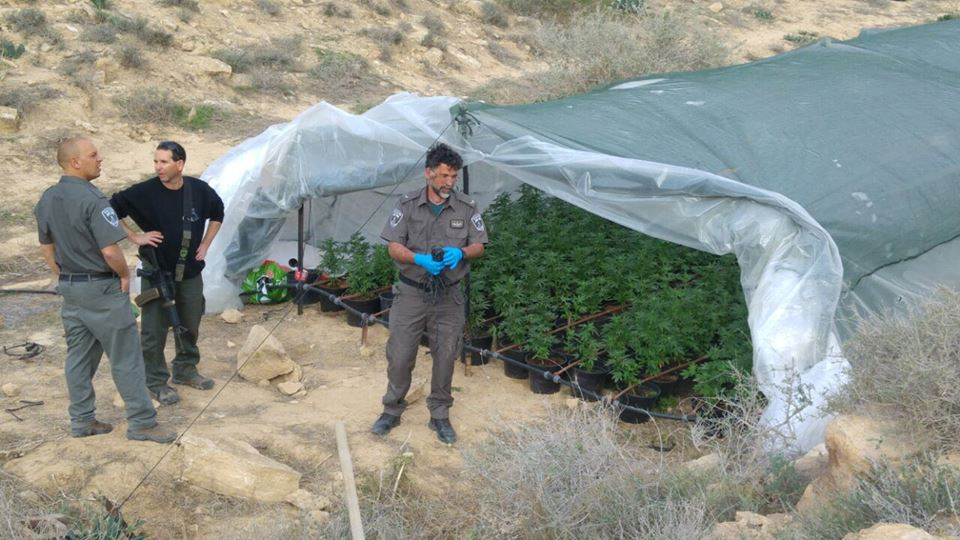 Cannabis Greenhouse in the Negev