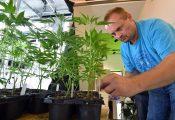 לראשונה: חנות למכירת צמחי קנאביס נפתחה באיטליה