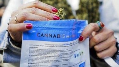 Photo of הראשונה בעולם: אורוגוואי החלה למכור קנאביס לתושבים