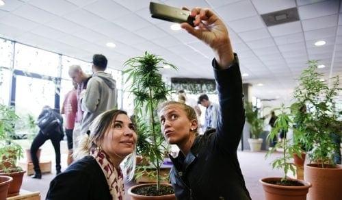שתי בנות מצטלמות על רקע צמחי קנאביס באורוגוואי