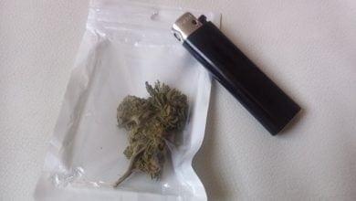 2 GINS Cannabis