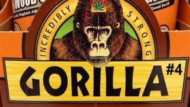 the Gorila Glue logo