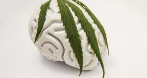 השפעת קנאביס על המוח
