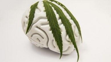 Photo of קנאביס מגן מפני שבץ מוחי: משפר את ספיגת החמצן במוח