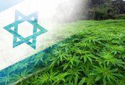 שיא של כל הזמנים במעצרי קנאביס בישראל