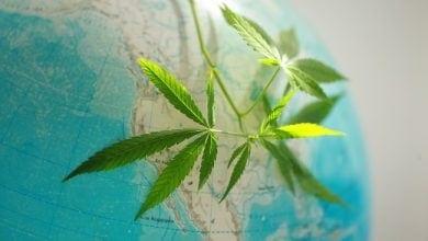 Cannabis Canada Israel Kronos Gan Shmuel