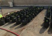 """מורים בבתי ספר בנגב יחפשו """"צמחים חריגים"""" על הגגות"""