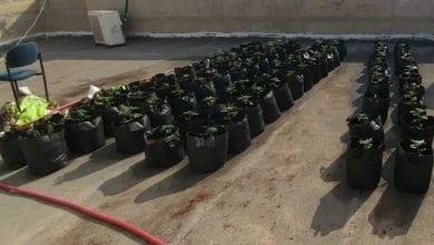 """Photo of מורים בבתי ספר בנגב יחפשו """"צמחים חריגים"""" על הגגות"""