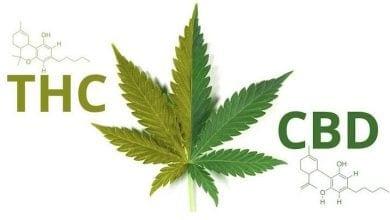 Photo of מחקר: CBD מאזן את תופעות הלוואי של THC