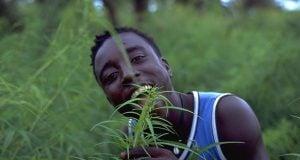 קנאביס רפואי אפריקה