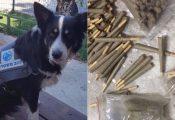 לוד: כלבת המשטרה 'ספידי' מצאה מאות ג'וינטים במקלט