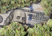 מיליארד דולר ב-8 חודשים: מכירות הקנאביס בקולורדו בשיא