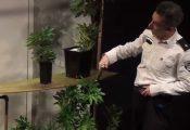 """אירוע חגיגי של המשטרה: הצגה על """"פרח פלאי בשם קנאביס"""""""