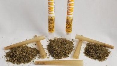 Photo of חדש: ניירות גלגול ספוגי THC