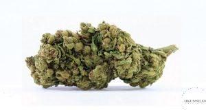 Zen Cannabis Avidkel