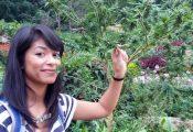 בתאילנד רוצים ענף קנאביס רפואי