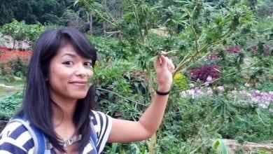 Photo of תאילנד פועלת להקמת ענף קנאביס רפואי