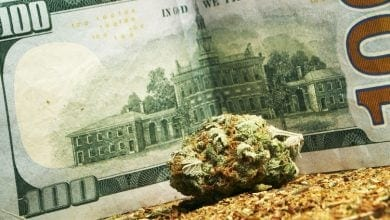 Cannabis Money Stocks