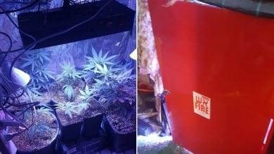 צמחי קנאביס בארון כיבוי אש