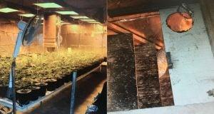 בית שקמה: קנאביס מתחת לאדמה