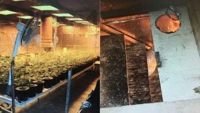 Photo of מתחת לאדמה: שתילי קנאביס נתפסו בחדר סודי במחסן