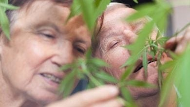 Photo of מעיין הנעורים: כך קנאביס מאט את הזדקנות המוח