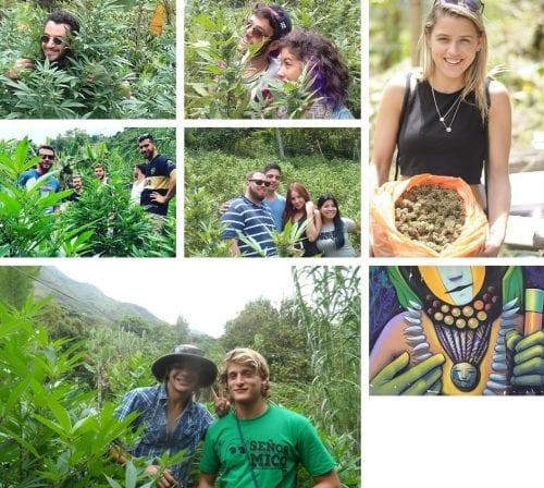 סיור חוות קנאביס קאלי קולומביה