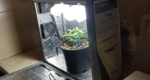 Cannabis Seed Marijuana in Computer Enclosure