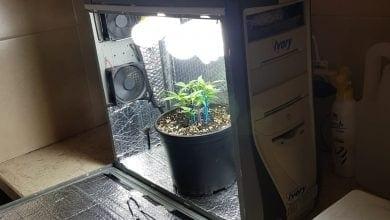שתיל קנאביס מריחואנה במארז מחשב