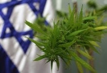 Cannabis plant against the background of the Israeli flag (Photo: Kobi Gideon, Flash 90)