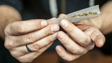 Hands roll a joint of cannabis