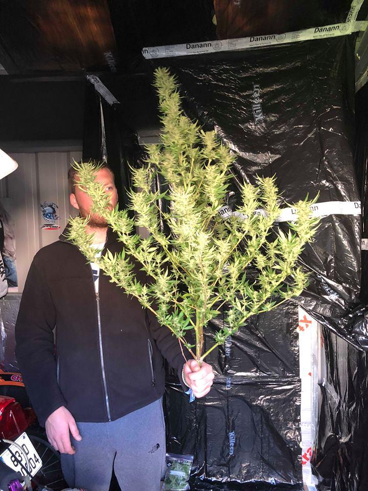 ריאן עם הצמח