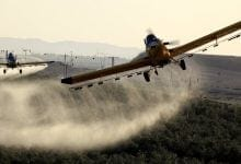 Pesticides Cannabis Spray (Photo: Flash 90)