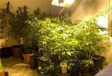 Cannabis Police Room Jerusalem