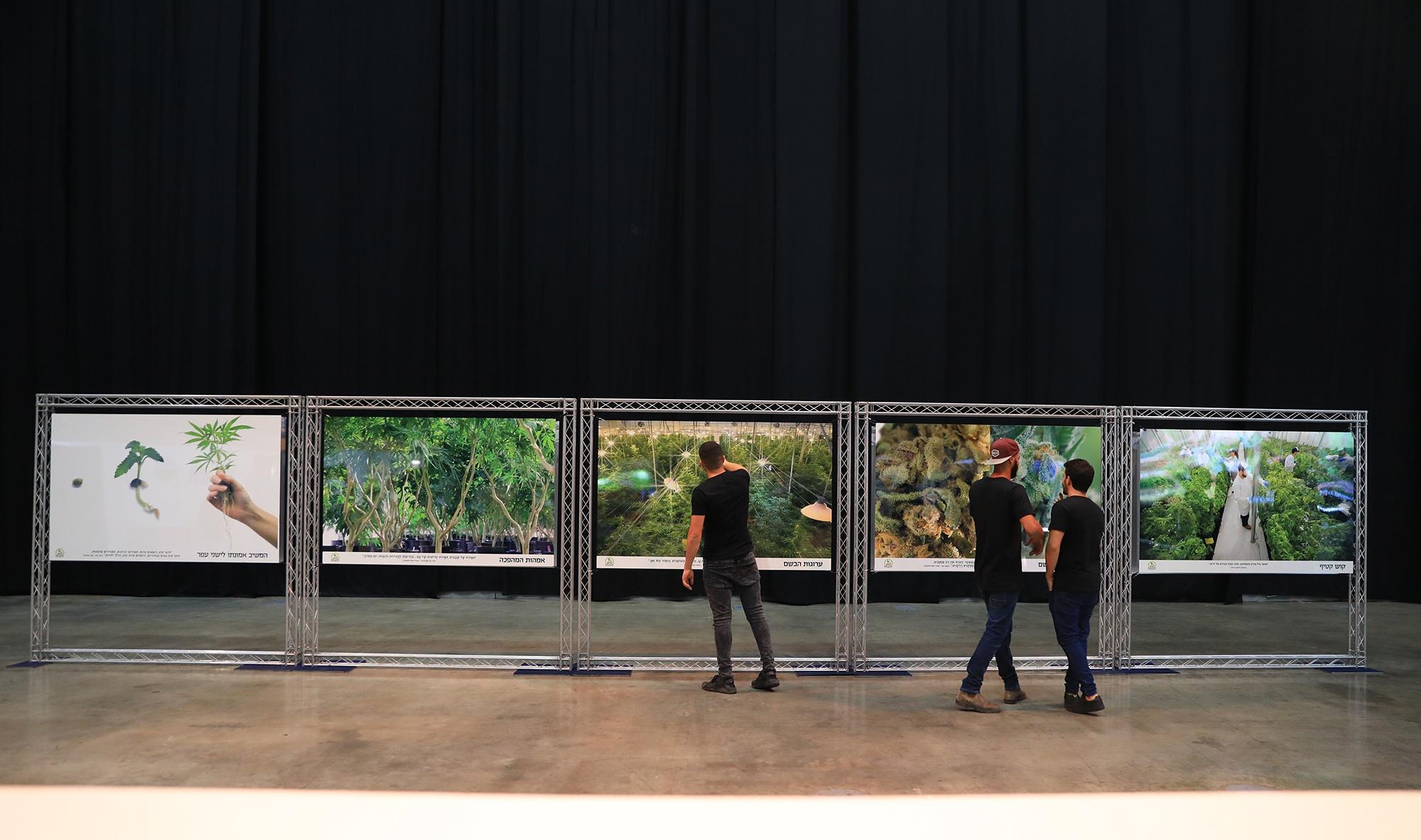 תערוכת צילומי קנאביס בגני התערוכה תל אביב (צילום: מור ברנשטיין)