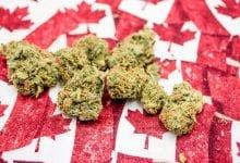פרחי קנאביס על רקע דגלי קנדה