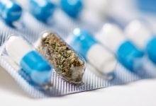 קפסולות תרופות קנאביס בנזודיאזפינים