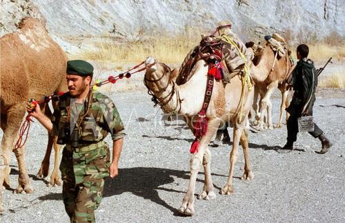 חיילים איראנים עוצרים שיירת גמלים לא מאויישת שהבריחה אופיום מאפגניסטן. קרדיט: Reuters, 1999