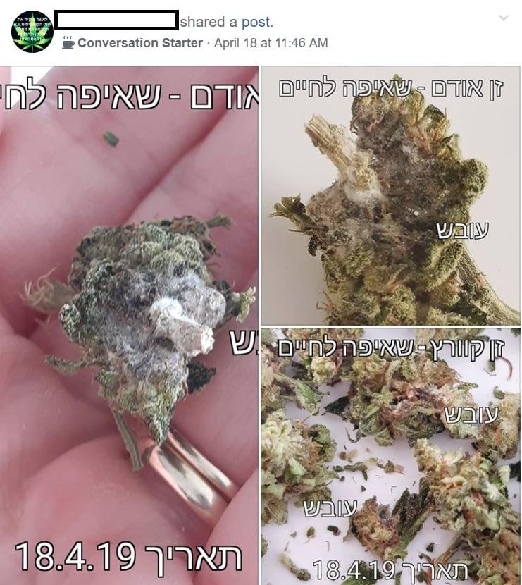 Cannabis medica con muffa di Aspiration for Life Company - Foto dal forum Cannabis su Facebook