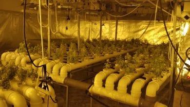 Photo of מתקן הידרו לגידול קנאביס נתפס בקלנסווה: 800 שתילים הושמדו