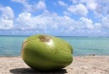 קוקוס בחוף ים גואם