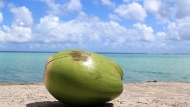 Coconut on the shore of Guam