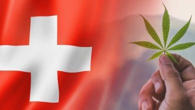 Cannabis flog die Flagge der Schweiz