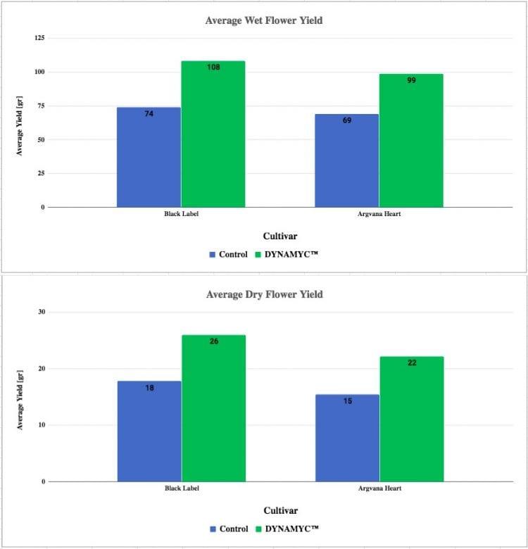 תוצאות ניסוי גידול קנאביס עם מיקוריזה