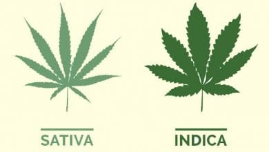 Indica Sativa - Is there a difference?