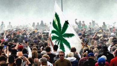 Flag of Cannabis Legalization Demonstration