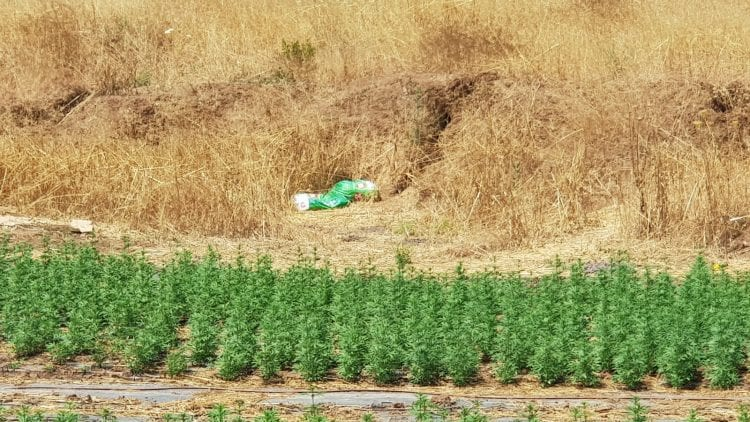 Perception of Cannabis Field Companies