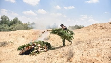 Photo of שוטרים שרפו שדה קנאביס – נחל ניצנה עלה באש